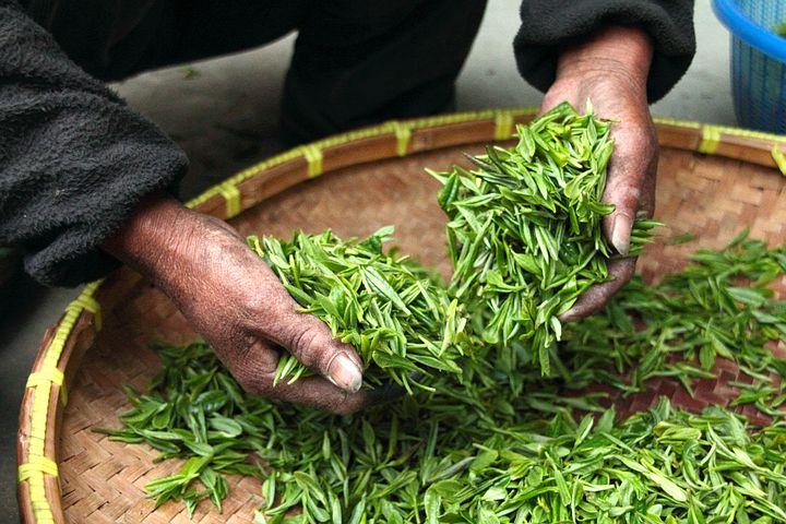 Quels thés pour quels bienfaits ?